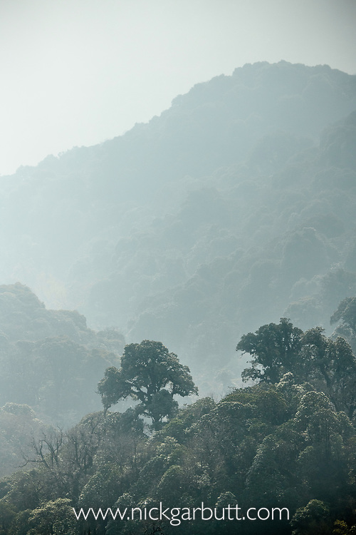 Mid altitude temperate montane forest, Himalayan foothills, Singalila National Park, India.