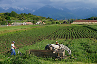 ROMANIA Transylvania Voila, farmer with horse and plough  / RUMAENIEN Transsilvanien Siebenbuergen, Voila, Bauer mit Pferd und Pflug, Hintergrund Fagaras Gebirge