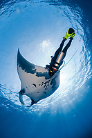 scuba diver and giant oceanic manta ray, Mobula birostris, formerly Manta birostris, with remora, suckerfish, Remora remora, San Benedicto, Revillagigedo (Socorro) Islands, Mexico, East Pacific Ocean