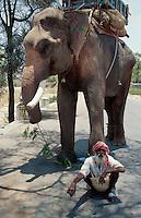 Indien, Ranakpur (Rajasthan), Elefant und Mahout