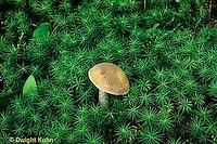 MY01-016d  Moss - mushroom.