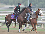 Point of Entry, trained by Shug Mcgaughey,exercises in preparation for the upcoming Breeders Cup at Santa Anita Park on November 1, 2012.