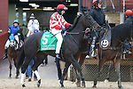 March 14, 2020: Serengeti Empress (5) with jockey Joseph Talamo aboard before the Azeri Stakes at Oaklawn Racing Casino Resort in Hot Springs, Arkansas on March 14, 2020. Justin Manning/Eclipse Sportswire/CSM