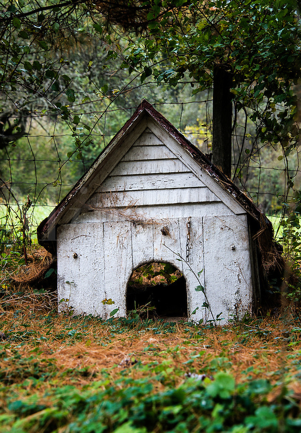 Old dog house.