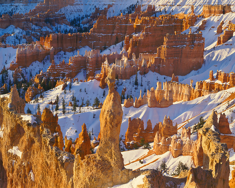 Morning light on eroded formations in Queen's Garden Trail viewed from Sunrise Point; Bryce Canyon National Park, UT