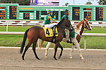 January 16, 2016: Fila Primera with Jose Valdiva up in the Marie G. Krantz Memorial Stakes race at the Fairground race course in New Orleans Louisiana. Steve Dalmado/ESW/CSM