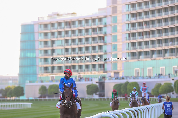 March 27, 2021: Horses gallop back from running in the Dubai Gold Cup on Dubai World Cup Day, Meydan Racecourse, Dubai, UAE. Shamela Hanley/Eclipse Sportswire/CSM
