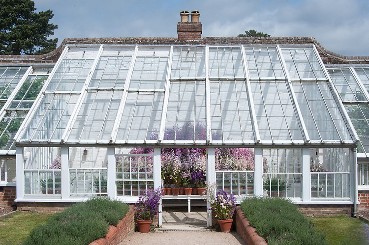 Greenhouse, Audley End, late May.
