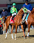 OZONE PARK, NY - JANUARY 30:  Donegal Moon #1 with Aaron Gryder in post parade on Withers Stakes Day at Aqueduct Race Track in Ozone Park, New York on January 30, 2016. (Photo by Sue Kawczynski)