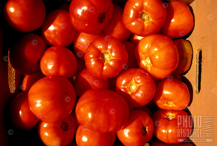 Just harvest tomatoes from Jefts Farm, Island of Molokai