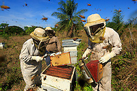 The harvest has to be quick and precise. The honey-filled frames are removed from the hives. The inspection is brief; the bees are furious. ///La récolte doit être rapide et précise. Les cadres remplis de miel sont enlevés des ruches. L'inspection est sommaire, les abeilles sont furieuses.