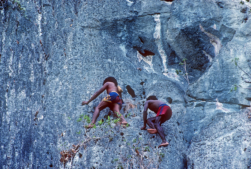 """The Tagbanwa or Tagbanua, one of the oldest ethnic groups in the Philippines, can found in central and northern Palawan. Research has shown that the Tagbanwa are possible descendants of the Tabon Man; thus, making them one of the original inhabitants of the Philippines. They are brown-skinned, slim and straight-haired ethnic group and exceptional climbers. <br /> <br /> Showcasing in particular their incredible climbing skills while collecting the thought after """"White Gold"""" or bird's nest on Coron Island, Philippines<br /> <br /> Tagbanwa live in compact villages of 45 to 500 individuals their total estimated population is over 10,000 from which 1,800 of these are in the Calamianes Group of islands.<br /> <br /> The  Tagbanua culture is closely intertwined with that of swallows who build edible nests in caves on the towering cliffs of the island.The edible bird's nest caves are maintained by individual families, and provide another major source of income for the indigenous people in the island.<br /> <br /> Coron island comprises of massive vertical limestone cliffs that reach up to 600 meters above sea level and eight (8) brackish lakes and three (3) smaller one's that have underground connections to the sea.<br /> The nests from the swallow are harvested by the Tagbanua; the sea swallows make the nest from saliva and it's a highly valued ingredient in Cantonese bird's nest soup. Each family group of Tagbanua's closely guarding their individual Caves in these limestone cliffs and only harvest the Nest during a particular season, safeguarding the survival for future generations. They are also guarding the area during the harvest season, temporary putting up a primitive shelter just below the caves to ensure that no outsider is encroaching on their territory that has been in their family for generations."""