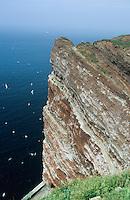 Vogelfels, Vogelfelsen, Brutfelsen, Helgoland, Nordsee