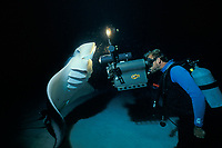 Bob Cranston films reef manta ray, Mobula alfredi, known as Mollie the Manta, feeding on plankton at night, Little Cayman Island, Cayman Islands, Caribbean Sea, Atlantic Ocean