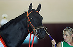 September 07, 2015.  Ben's Cat, a multiple past winner of the Turf Monster Handicap, finished 5th this time. He is trained by King Leatherbury. Pure Sensation (#4), Kendrick Carmouche up, wins the Grade III Turf Monster Handicap Stakes, five furlongs, for three-year-olds and upward, at  Parx Racing in Bensalem, PA. Trainer is Christophe Clement; owner is Patricia Generazio. (Joan Fairman Kanes/ESW/CSM)