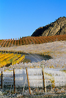 Ice Covered Vineyard in Autumn, in preparation for the Ice Wine Harvest, in the South Okanagan Region of British Columbia, Canada