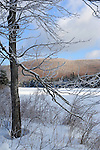 Ice Covered Branches on a Winter Morning at Cold Pond in New Hampshire