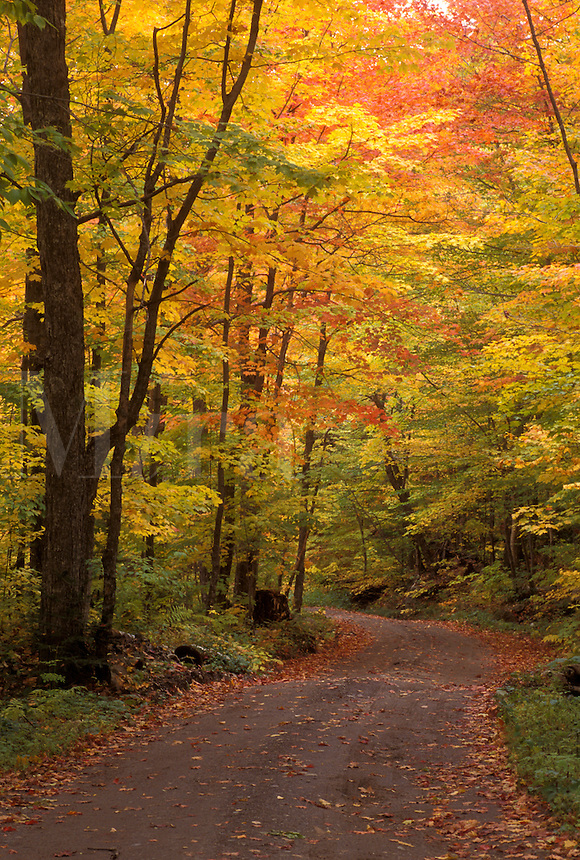 country road, fall, VT, Vermont, Colorful fall foliage along Long Pond Road in the autumn in Westmore.