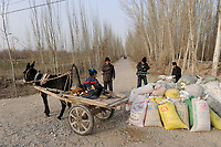 CHINA, province Xinjiang, uighur village Jin Erek near city Kashgar where uyghur people are living, farmer sell harvested cotton to dealer / CHINA Provinz Xinjiang, Jin Erek ein uigurisches Dorf bei Stadt Kashgar, hier lebt das Turkvolk der Uiguren, Bauern verkaufen Baumwolle an Haendler