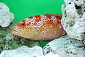 Poisonous animals exhibition opens at Sunshine Aquarium