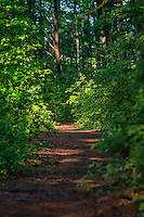 Hiking path, Prime Hook State Wildlife Management Area, Delaware