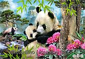 Howard, SELFIES, paintings+++++,GBHR904,#Selfies#, EVERYDAY ,panda,pandas
