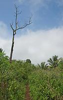 Trail on the upper slopes of Mount Manucoco, Atauro Island, Timor-Leste (East Timor)