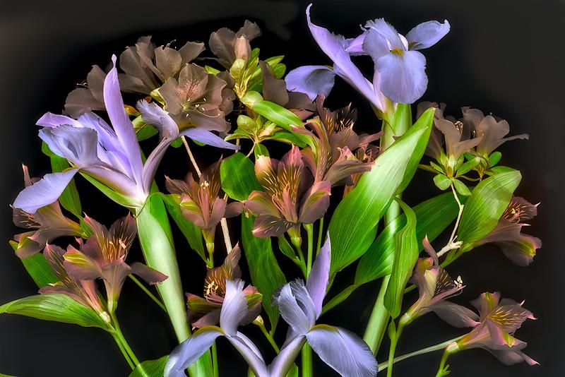 Alstroemeria,iris and azaleas close up.