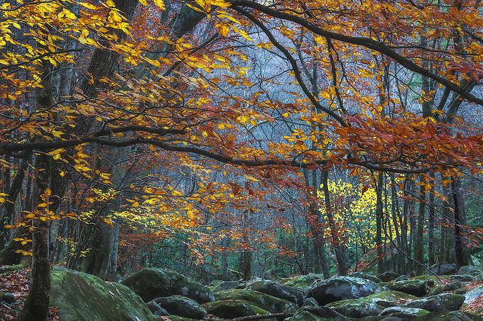 Nature's hidden secrets, deep in the Appalachian forest.