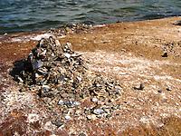 Möwengewölle, Gewölle einer Möwe auf Küstenfels, zerfällt in Muschel- und Schnecken-Schalenreste
