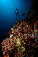 Diver off of Sumbawa, Indonesia MR
