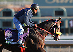 Trinniberg, trained by Shivananda Parbhoo, exercises in preparation for the upcoming Breeders Cup at Santa Anita Park on October 30, 2012.