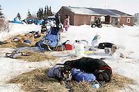 Dogs rest in Koyuk on Friday