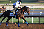 OCT 28 2014:Fed Biz, trained by Bob Baffert, exercises in preparation for the Breeders' Cup Dirt Mile at Santa Anita Race Course in Arcadia, California on October 28, 2014. Kazushi Ishida/ESW/CSM