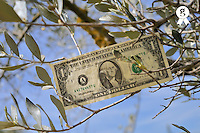 US one dollar banknotes on tree (Licence this image exclusively with Getty: http://www.gettyimages.com/detail/81867346 )