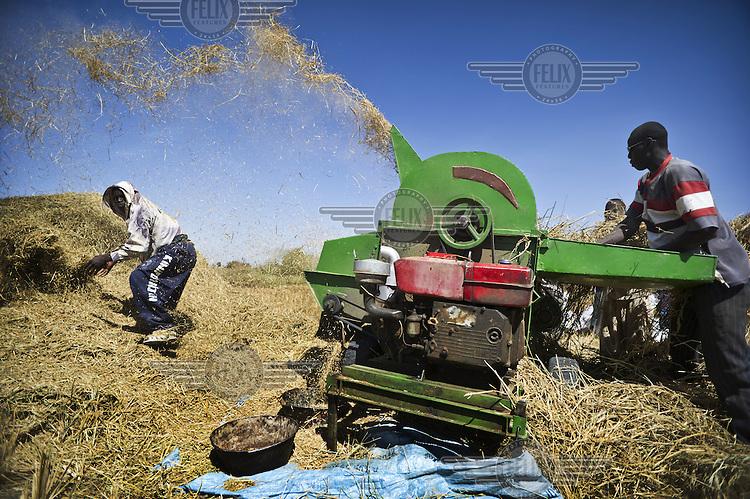 Farmers machine winnowing newly harvested rice on farmland between Markala and Niono in the Office du Niger, an irrigation scheme near Segou.