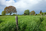Europa, DEU, Deutschland, Nordrhein-Westfalen, Niederrhein, Rees, Reeserward, Landschaft, Natur, Umwelt, Landschaft, Jahreszeiten, Stimmungen, Landschaftsfotografie, Landschaften, Landschaftsphoto, Landschaftsphotographie, <br /> <br /> [Fuer die Nutzung gelten die jeweils gueltigen Allgemeinen Liefer-und Geschaeftsbedingungen. Nutzung nur gegen Verwendungsmeldung und Nachweis. Download der AGB unter http://www.image-box.com oder werden auf Anfrage zugesendet. Freigabe ist vorher erforderlich. Jede Nutzung des Fotos ist honorarpflichtig gemaess derzeit gueltiger MFM Liste - Kontakt, Uwe Schmid-Fotografie, Duisburg, Tel. (+49).2065.677997, ..archiv@image-box.com, www.image-box.com]