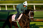 April 26, 2021: Will's Secret gallops in preparation for the Kentucky Oaks at Churchill Downs in Louisville, Kentucky on April 26, 2021. EversEclipse Sportswire/CSM