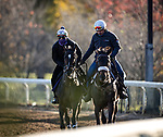 Rushing Fall, trained by Chad C. Brown, exercises in preparation for the Breeders' Cup Filly & Mare Turf at Keeneland 11.03.20.
