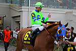 February 21, 2015: War Story with Kent J Desormeaux up in the Risen Star Stakes at the New Orleans Fairgrounds Risen Star Stakes Day. Steve Dalmado/ESW/CSM