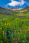 San Juan Mountains, CO<br /> American Basin with paintbrush (Castilleja rhexifolia),  sneezeweed (Dugaldia hoopesii), delphinium (Delphinium barbeyi) and other wildflowers in a meadow beneath Handies Peak