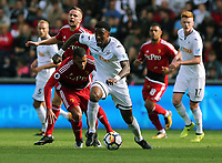 Leroy Fer of Swansea City in action during the Premier League match between Swansea City and Watford at The Liberty Stadium, Swansea, Wales, UK. Saturday 23 September 2017