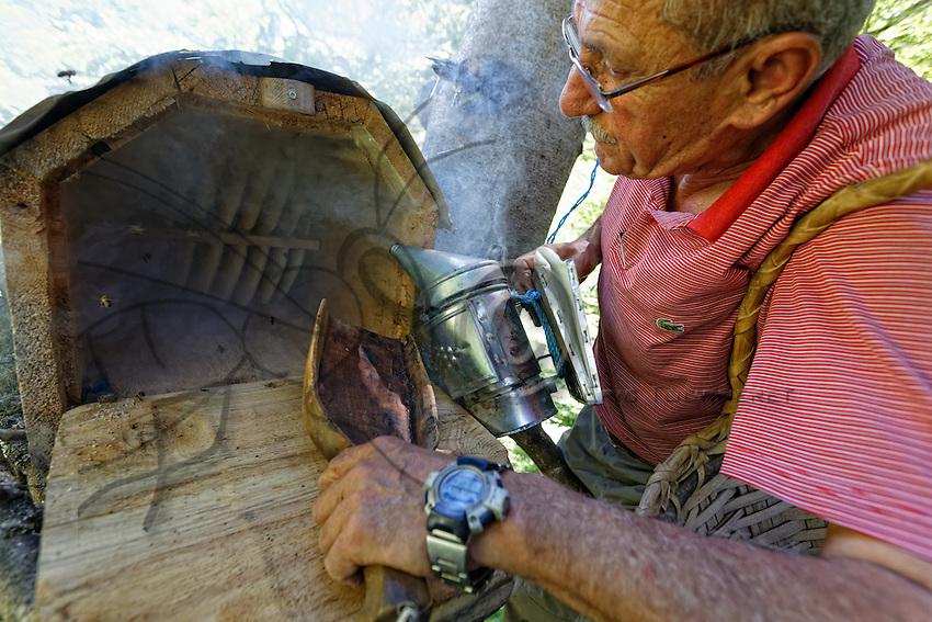 Camlihemsin: Mustafa Memoglu opens a trunk hive on a branch to inspect the colony and taste the honey.///Camlihemsin: Mustafa Memoglu ouvre une ruche tronc installé sur une branche pour inspecter la colonie et gouter le miel.