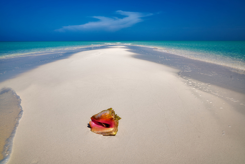 Conch shell on samll sand island. Turks and Caicos. Providenciales