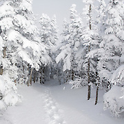 This is the image for January in the 2014 White Mountains New Hampshire calendar. Mount Osceola Trail on the summit of Mount Osceola in the White Mountains, New Hampshire USA. Purchase the calendar here: http://bit.ly/1audUBp .