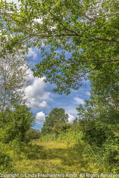 A woodland path on a beautiful summer day in northern Wisconsin.