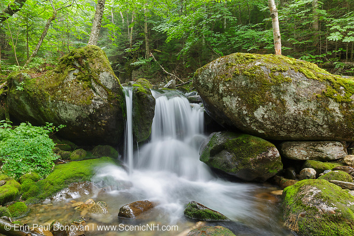 The top section of Cascade #8 along Cold Brook in Low and Burbank's Grant, New Hampshire during the summer months.
