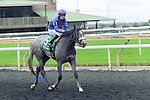 Roaming(5) with Jockey Gerry Olguin aboard after the Natalma Stakes at Woodbine Race Course in Toronto, Canada on September 13, 2014 with Jockey Patrick Husbands aboard.