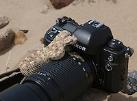 Mojave desert sidewinder, Crotalus cerastes cerastes, rests on a camera in Death Valley National Park, California