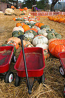 Red Radio Flyer wagons and pumpkins, orange, green and white  - The Pumpkin Depot in Half Moon Bay is ready to fill jack-o'-lantern dreams.